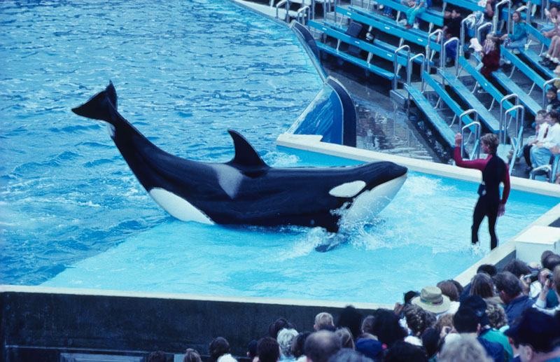Delfin Tötet Mensch