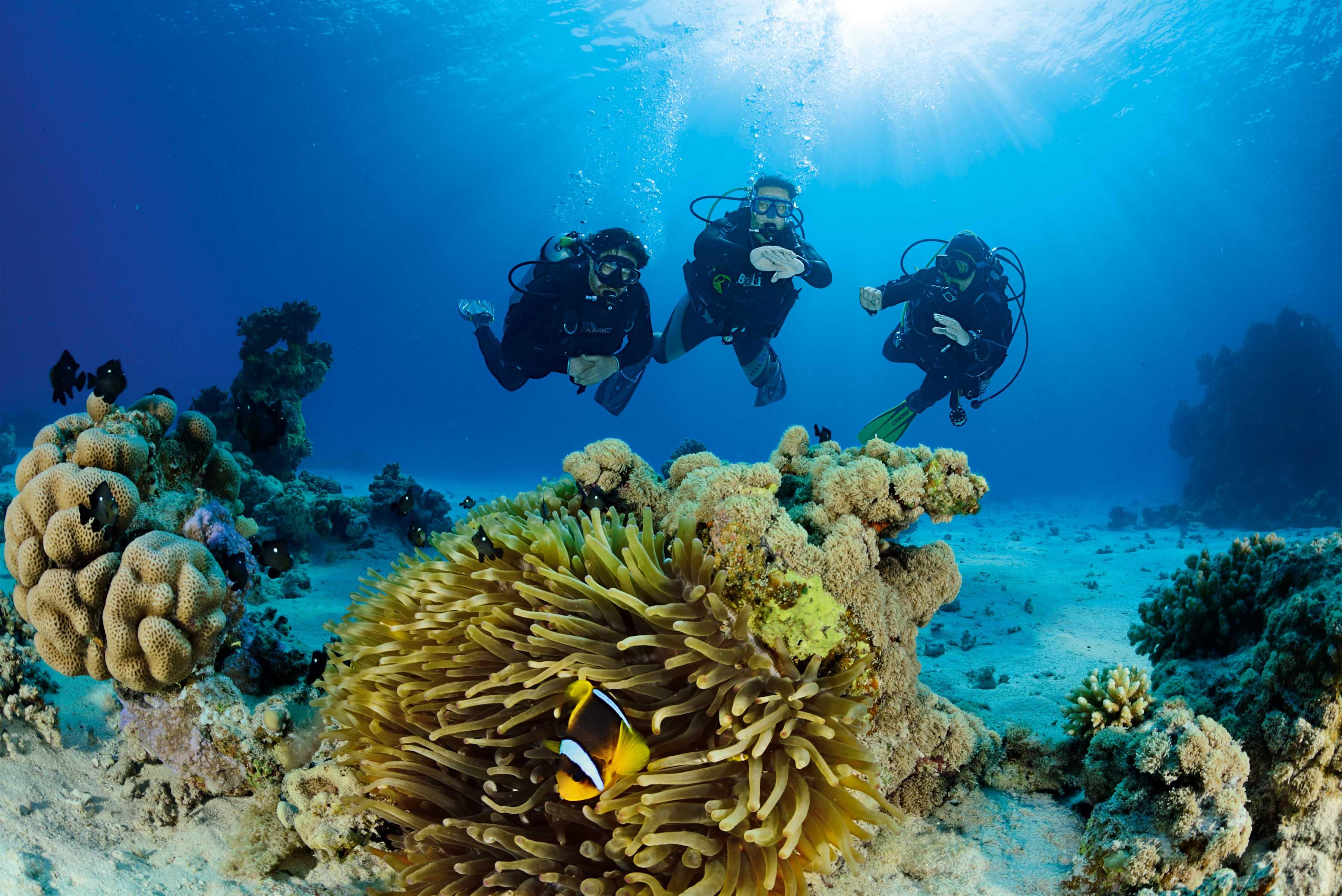 Tauchurlaub In Thailand Spanien Oder Auf Den Malediven Spaß Für