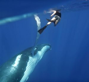 SwimmingWithHumpbackWhales_PhotoCredit_Sunreef.jpg
