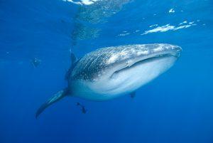 "Vor Cancun geht es auf ""Walhaijagd"". Foto: Extratour"