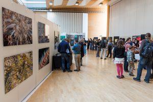 UW-Fotografen und -Filmer können sich noch beim UW-Festival in der Schweiz anmelden.