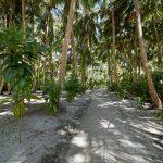 Tropische Inselmitte – hier wachsen unter anderem Palmen und Gummibäume. Foto: H. Hoepfner