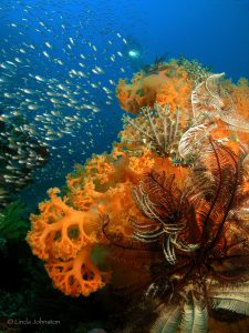 Raja Ampat gilt als schönstes Tauchgebiet der Welt.