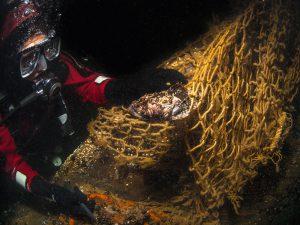 Taucher befreit einen Seeskorpion (Myoxocephalus scorpius) aus einem Geisternetz am Wrack der 'Friedrich Engels' in der Ostsee