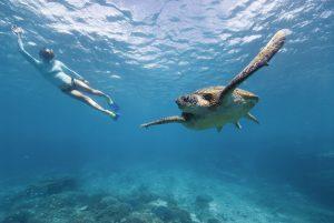 7_GreatBarrierReef_Turtle