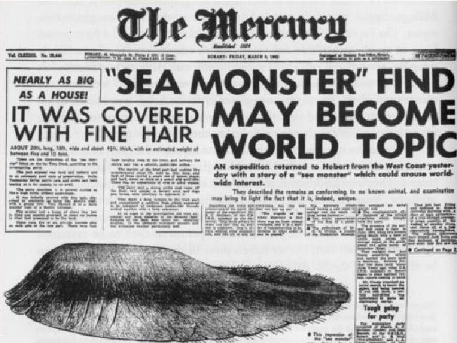 Der Ur-Globster: Das berühmte Seeungeheuer wurde 1960 in Tasmanien gefunden und erstmal als Globster bezeichnet.