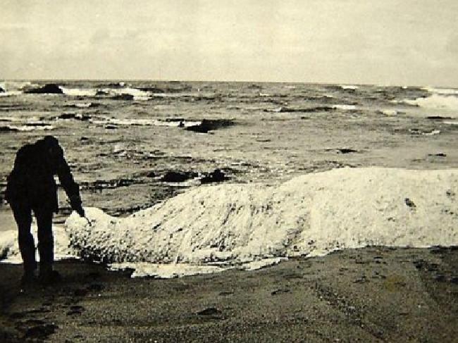 Trunko, die weiße Masse, wurde von Killerwalen attackiert und anschließend leblos in Südafrika angespült.