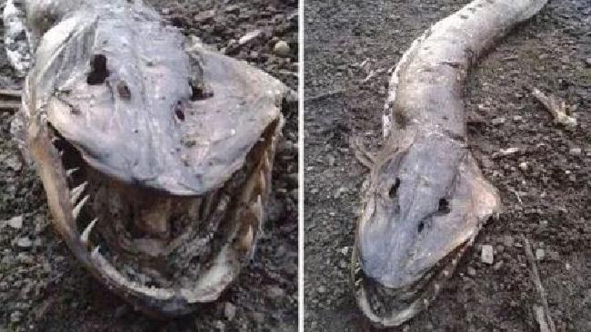 Das Roch Ness Monster: Angeblich eine ganz seltsame Abwandlung eines Hechts.