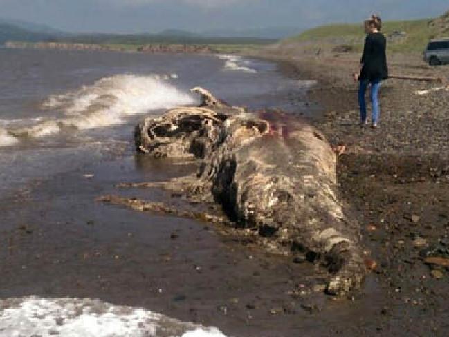 Das Monster von Sakhalin wurde auf der größten russischen Insel angespült.