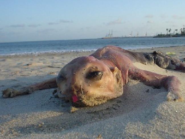 Seeungeheuer par excellence: Das Canvey Island Monster