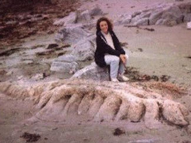 Rippen, Kopf und Haare – Experten identifizierten das Tier als Ringelwurm. Der wird normalerweise jedoch nur fünf Zentimeter lang – und nicht fünf Meter!