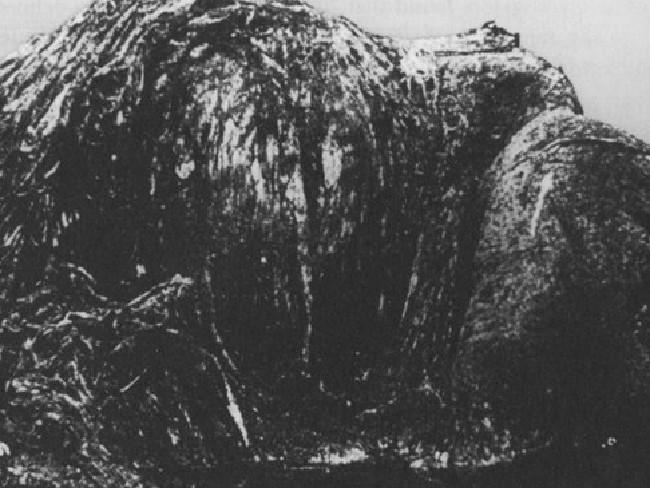 Nicht viel auf dem Foto zu erkennen: Das Monster aus Neuseeland hätte ein Wal sein können – wären da nicht die bis zu sechs Zoll langen Haare.