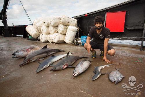 Da blutet das Herz: Keine Tierart ist vor illegaler Fischerei sicher. Foto: Eliza Muirhead/Sea Shepherd