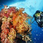 Weichkorallen und Federsterne faszinieren.Foto: W.Pölzer www.underwater-photos.net