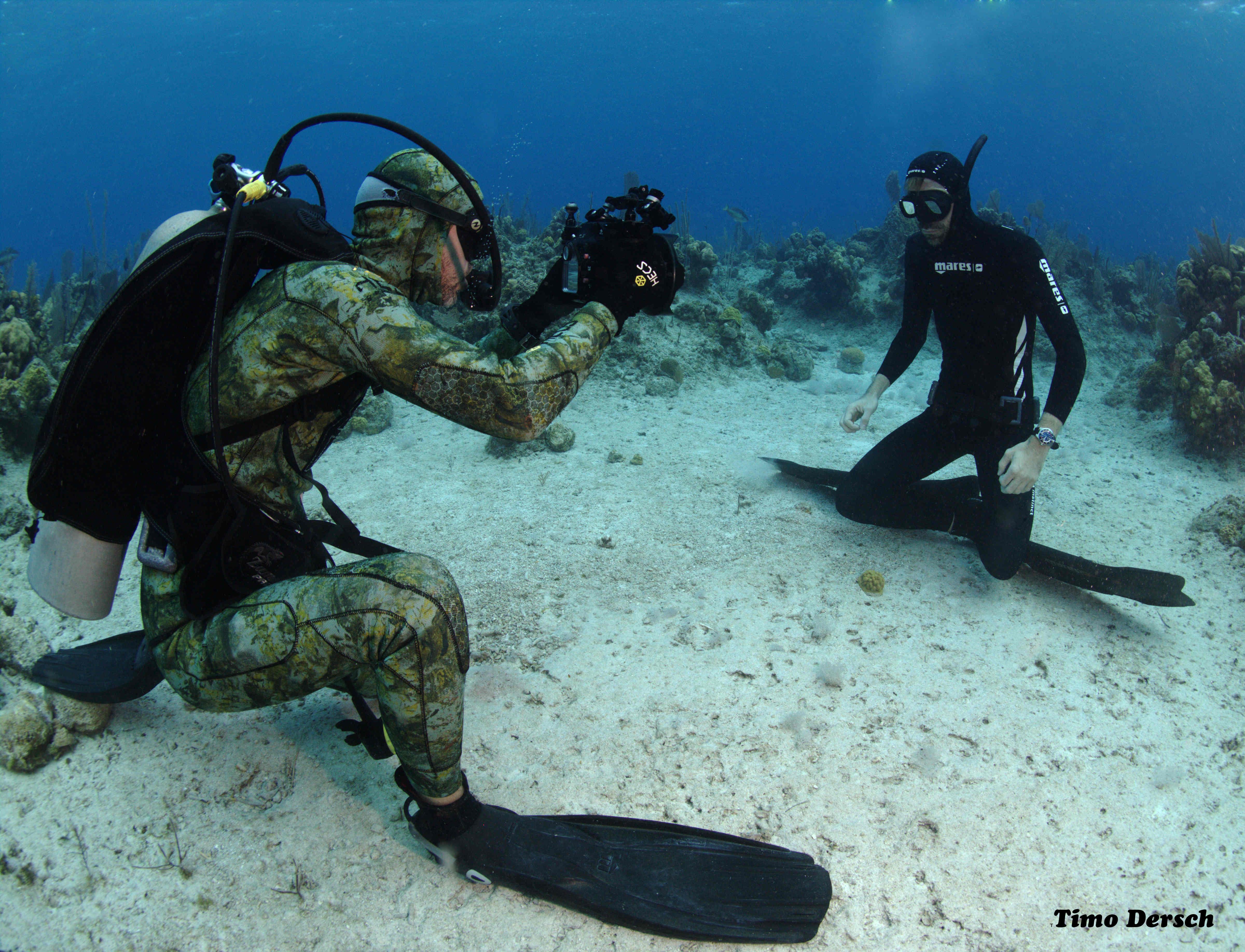 Bahamas Natur & Tierwelt - faszination-karibikde