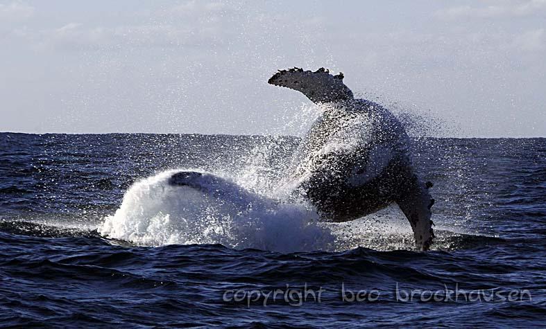 Der Sardine Run lockt die großen Tiere an. Foto: Beo Brockhausen