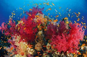 Das sogenannte Korallendreieck liegt wo? Foto: Wolfgang Pölzer