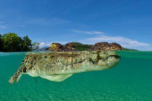 Womit werden die Reptilien angelockt? Foto: Werner Thiele