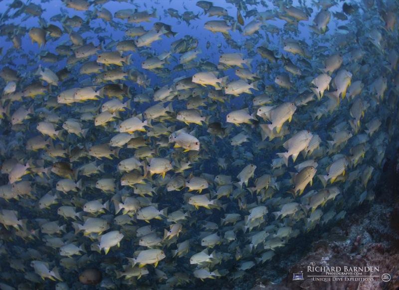 """""""Fischsuppe"""": Auf der Tour können Taucher einzigartige Tauchplätze entdecken! Foto: Richard Barnden"""