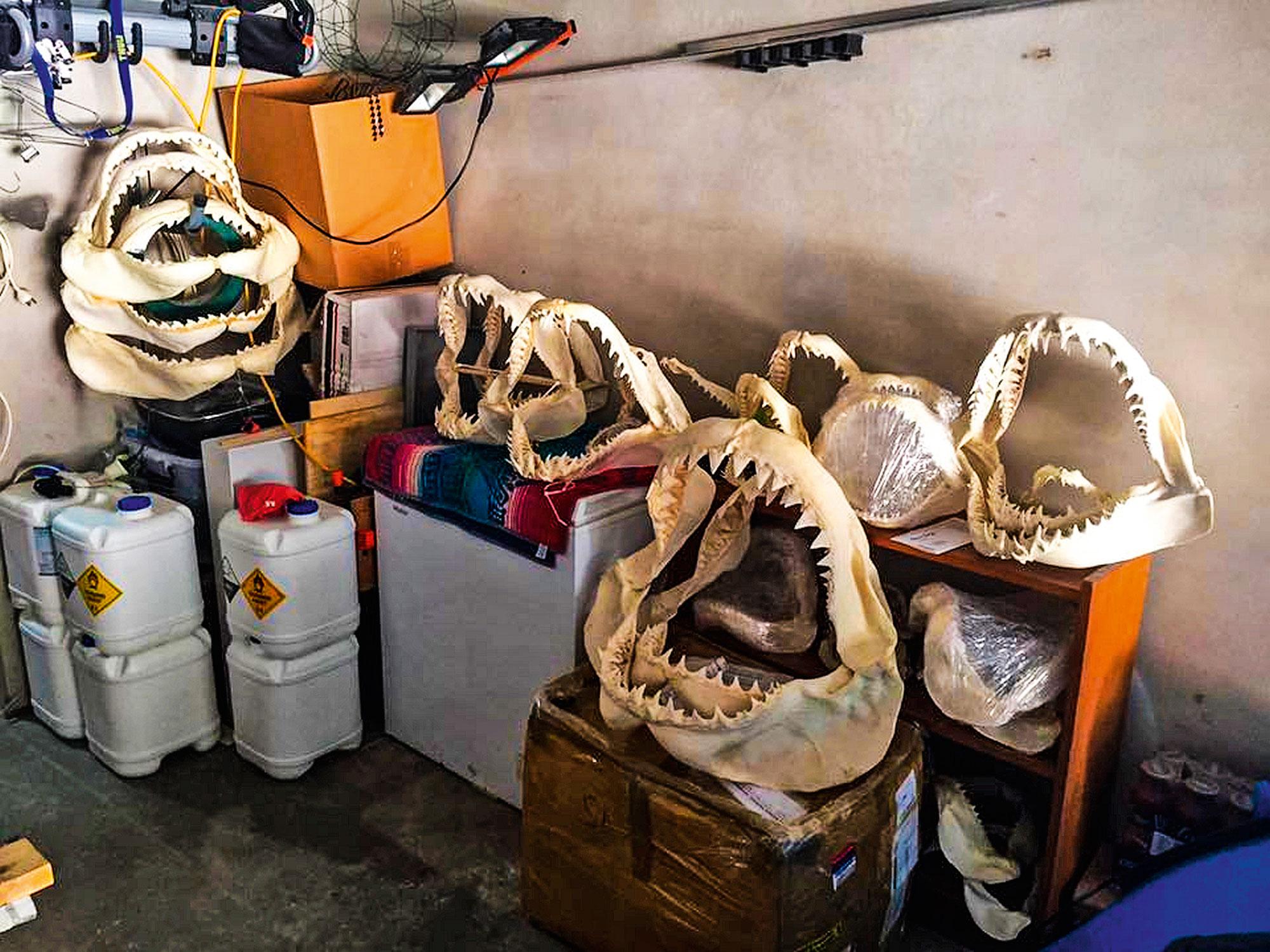 Unterschiedliche Kiefer in der Garage