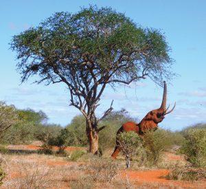 Neben Elefanten kann man noch .... im xxx sehen.