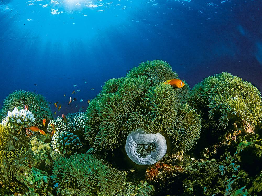 Das Paradies der Malediven erleben