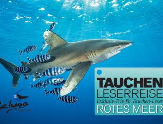 Kommen Sie mit – auf die nächste TAUCHEN-Leserreise im Roten Meer