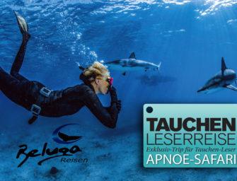 TAUCHEN-Leserreise: Exklusive Apnoe-Safari