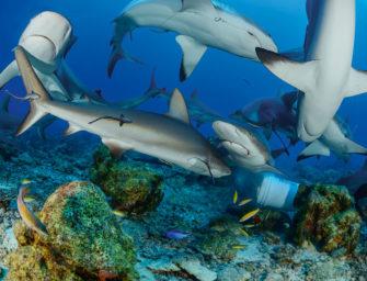 Hai-Tauchen und Dschungeltouren – so spannend ist Honduras