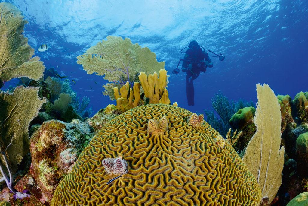 Prachtvoll bewachsen: Vor Roatan liegt das zweitgrößte Korallenriff der Welt. Foto: W. Pölzer