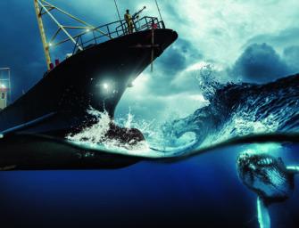 Walfang: subventionierter Völkermord im Meer
