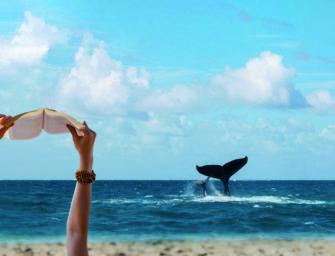 Ocean Heroes: Zwei tolle Bücher zu gewinnen!