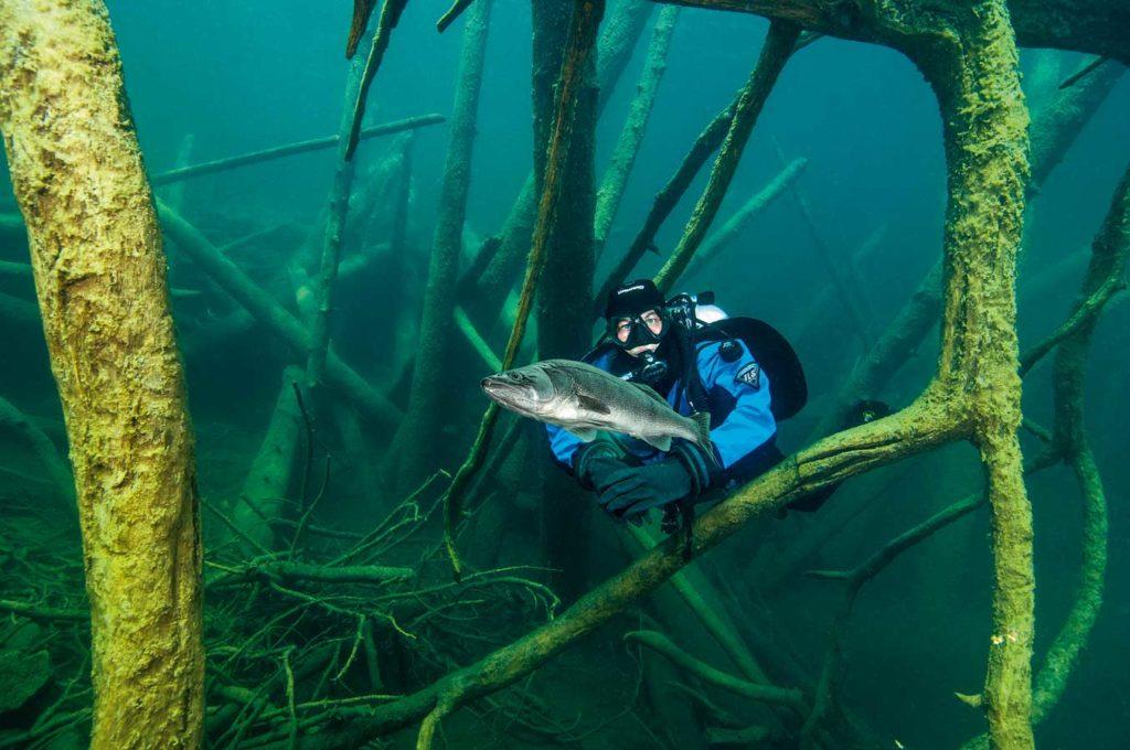 Spannend: Tauchen in einem UW-Wald, in dem sich Fische verstecken. Foto: G. Nowak