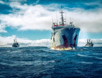 Peter Hammarstedt: Im Einsatz für Sea Shepherd