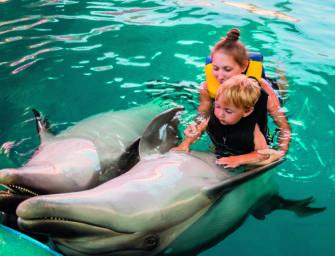 Interview mit Dr. Karsten Brensing: Delfintherapie ist sinnlos