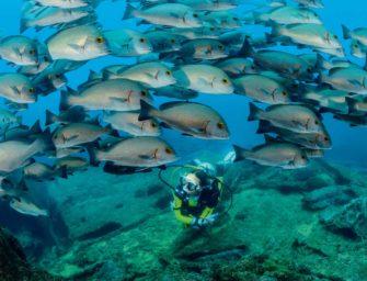 Fischschwärme satt – so schön ist das Tauchen in Oman