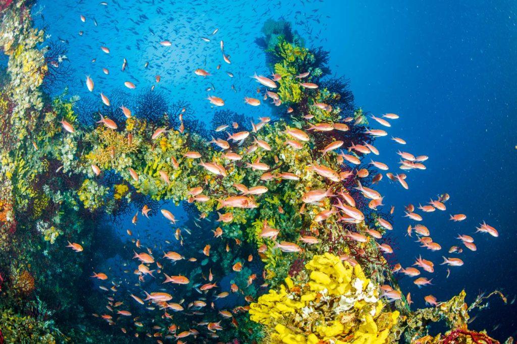 """Die """"Michael N. Maris"""" ist komplett besiedelt und sieht aus wie ein prächtiges Riff. Foto: F. Banfi"""