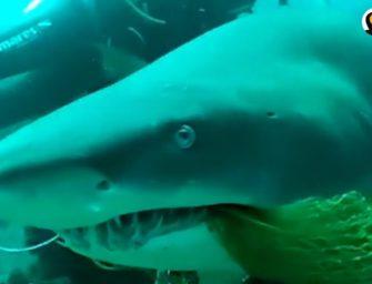Tauchlehrer entfernt Fischernetz aus dem Maul eines Hais