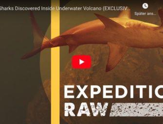 Haie leben in Unterwasser-Vulkan