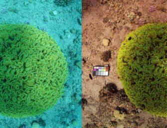 Algorithmus entfernt Wasser auf Unterwasser-Fotos!