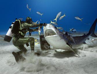 Bahamas: Insel-Hopping mit Hai-Garantie