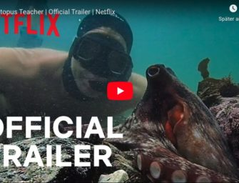 """My Octopus Teacher"" auf Netflix"