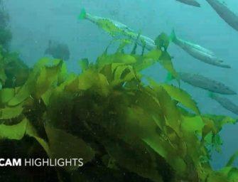 Unterwasser Live Kamera aus Australien