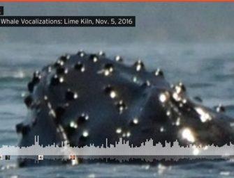 Unterwasser-Sinfonie von singenden Buckelwalen