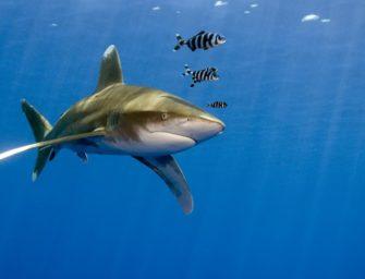 Hai beißt Touristen Arm und Bein ab