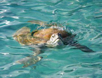 5.000 Schildkröten aus eiskaltem Wasser gerettet
