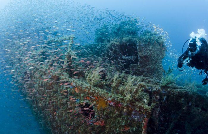 Der Tanker Romagna lief 1943 auf eine Mine – und wird heute von riesigen Fischschwärmen bevölkert.
