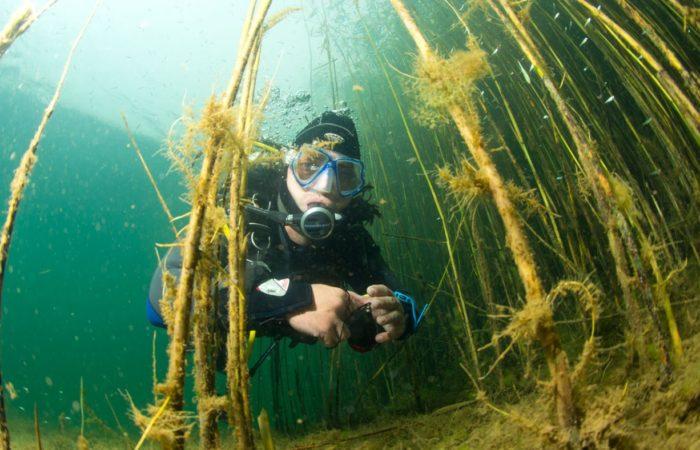Kinderstube: Direkt vor der Basis beginnt ein Flachbereich mit Seegraswiesen und Schilf, in dem Jungfische Schutz suchen.