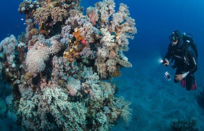 Die andere Seite: Abu Dabab, das sind nicht nur die berühmten Seegrasweiden. Es gibt auch Jahrhunderte alte Riffe.
