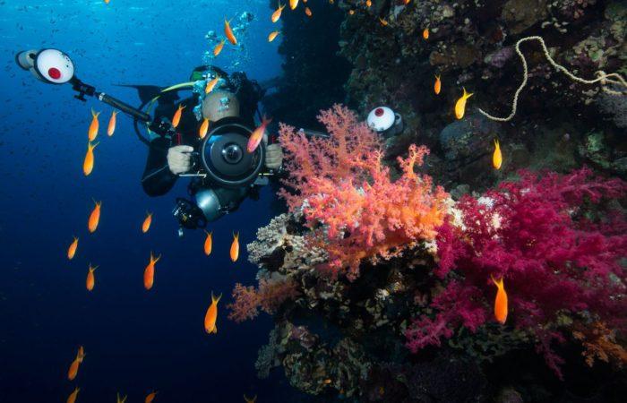 Das Paradies vor der Haustür: Das Elphinstone-Riff liegt 15 Speedbootminuten vom Equinox Resort entfernt.